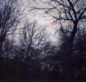 Diana Mini film - spooky trees