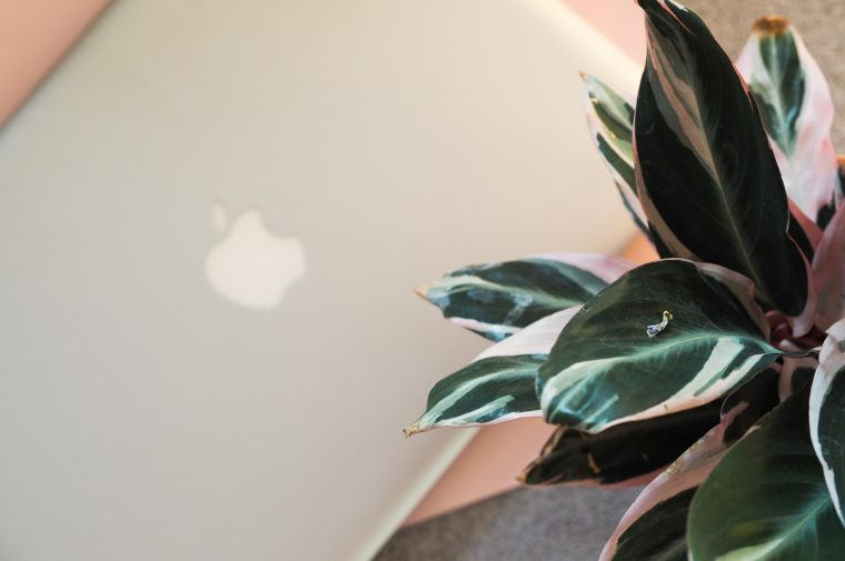 macbook laptop hidden by leafy plant